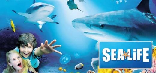 SealifeAcquarium